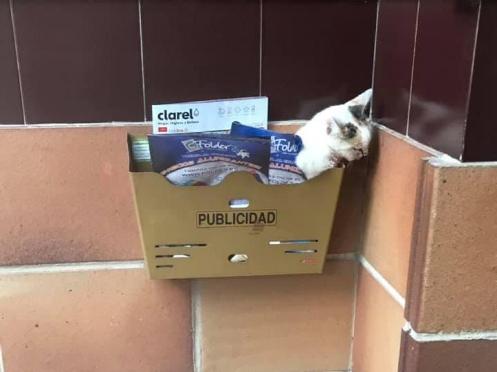El gato apareció malherido en un buzón de publicidad de un portal de Huesca.