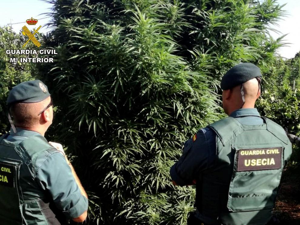 Detenido un policía local de Murcia con una tonelada de marihuana.