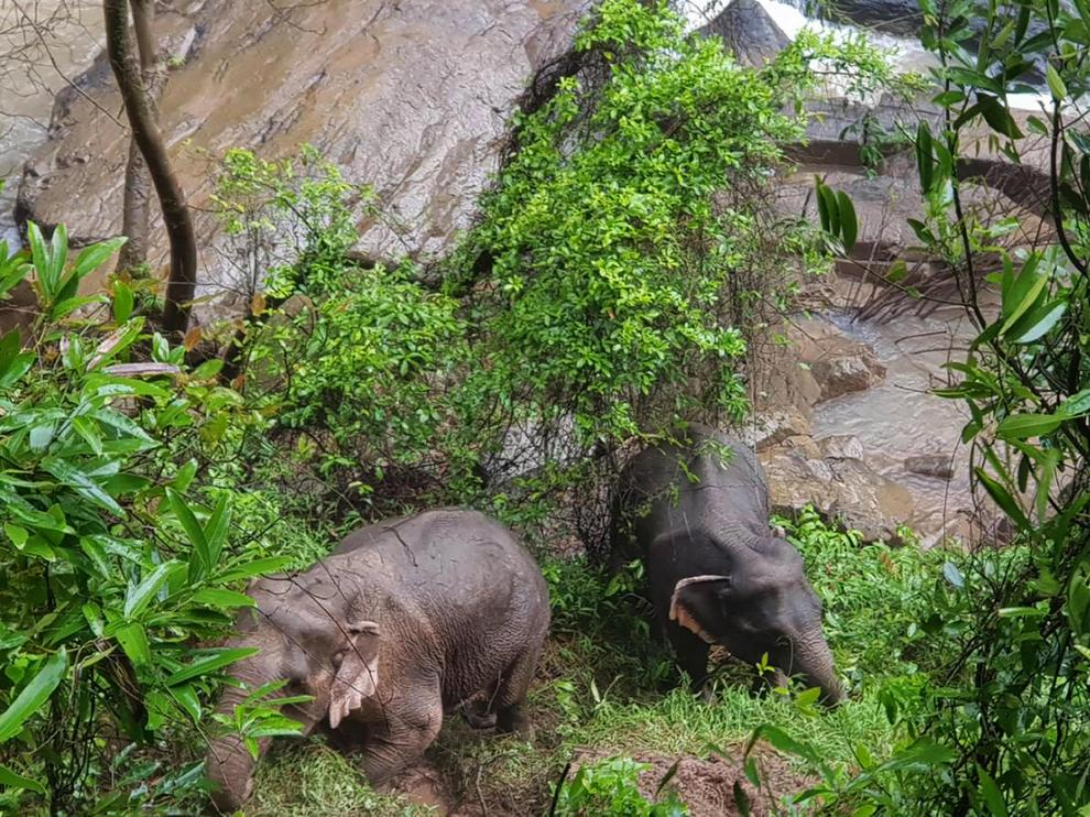 Khao Yai (Thailand), 05/10/2019.- A handout photo made available on 05 October 2019 by the Department of National Parks, Wildlife and Plant Conservation (DNP) shows two elephants that are expected to survive after falling into Haew Narok Waterfall in Khao Yai National Park, Prachin Buri Province, Thailand, 05 October 2019. Six elephants died after falling into the waterfall, two elephants survived, said the national park official. (Tailandia) EFE/EPA/DNP HANDOUT HANDOUT EDITORIAL USE ONLY/NO SALES HANDOUT EDITORIAL USE ONLY/NO SALES Six elephants died after falling into the waterfall in Khao Yai National Park