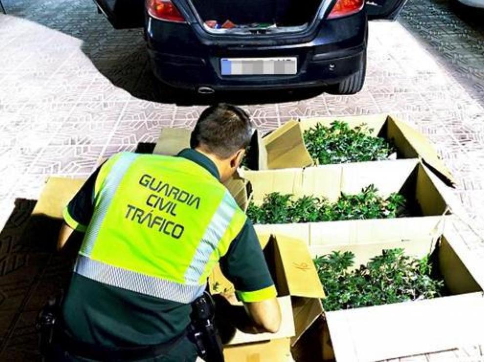 Las cajas de plantones de marihuana que transportaba el vehículo