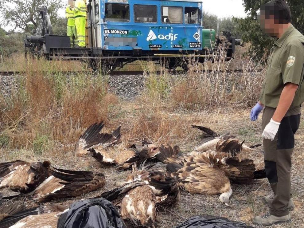 Los cadáveres de los buitres recuperados por los agentes.