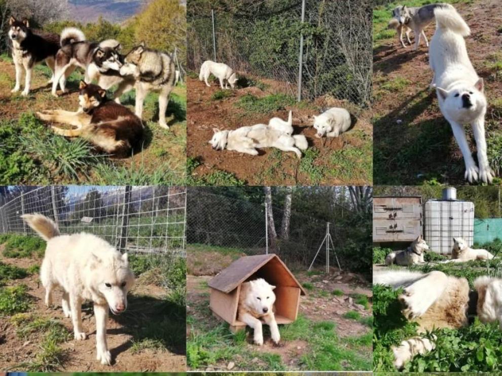 Buscan a 14 perros de mushing en el Valle de Tena desaparecidos al romper alguien la puerta de su perrera