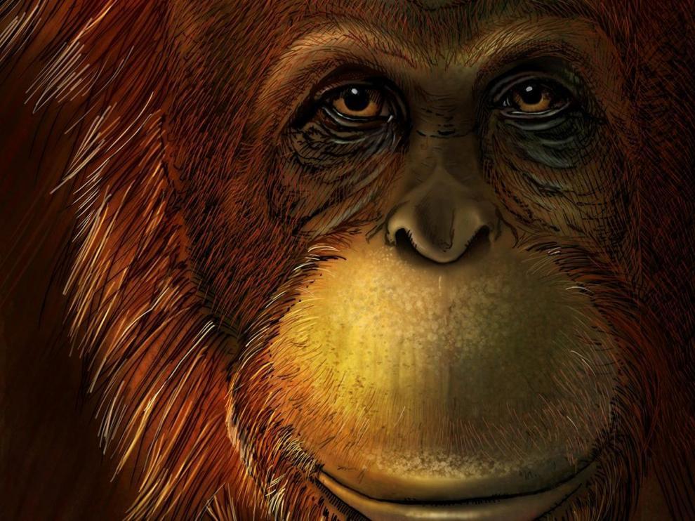 Recreación de cómo sería el Gigantopithecus