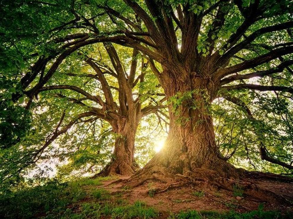 Convertirse en árbol es una nueva opción después de morir.