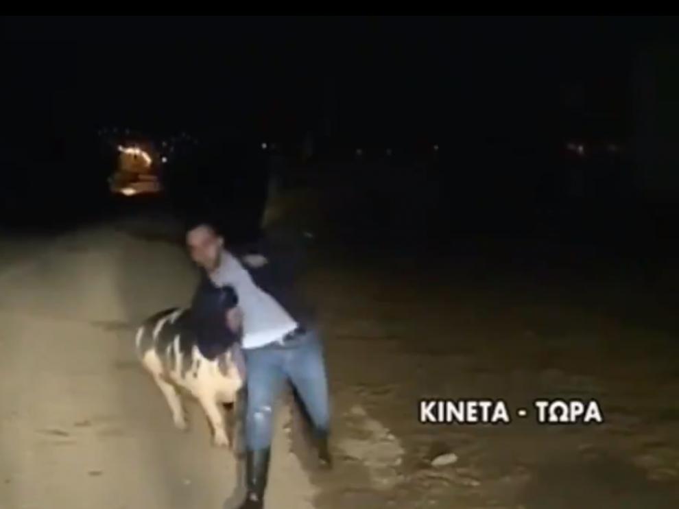 Captura del vídeo del cerdo persiguiendo al periodista