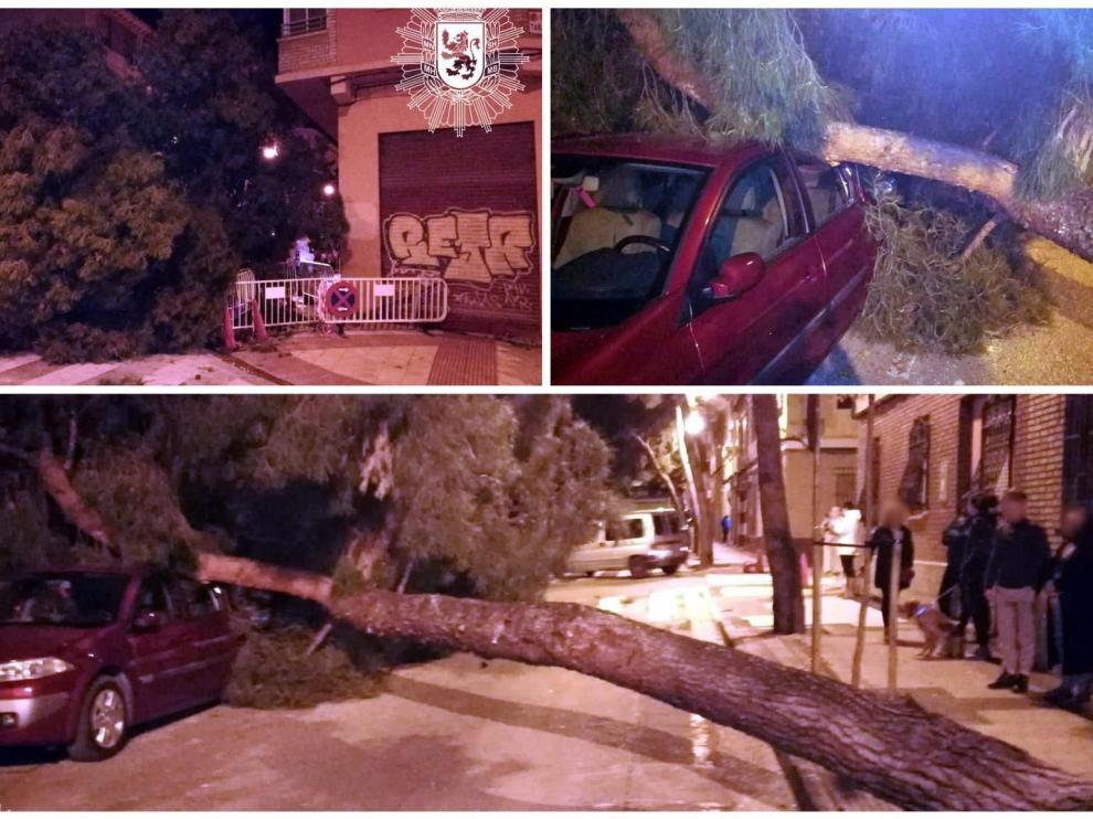 Imagen del árbol caído en las Delicias.