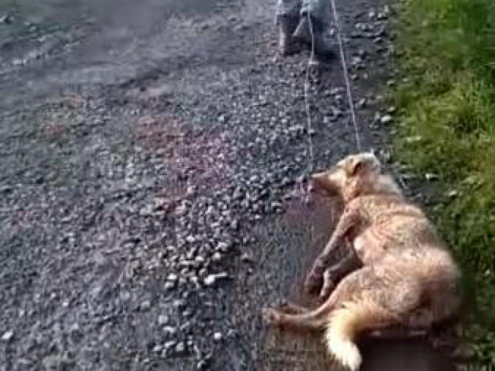 La perra, arrastrada después de recibir un tiro y ser brutalmente golpeada.