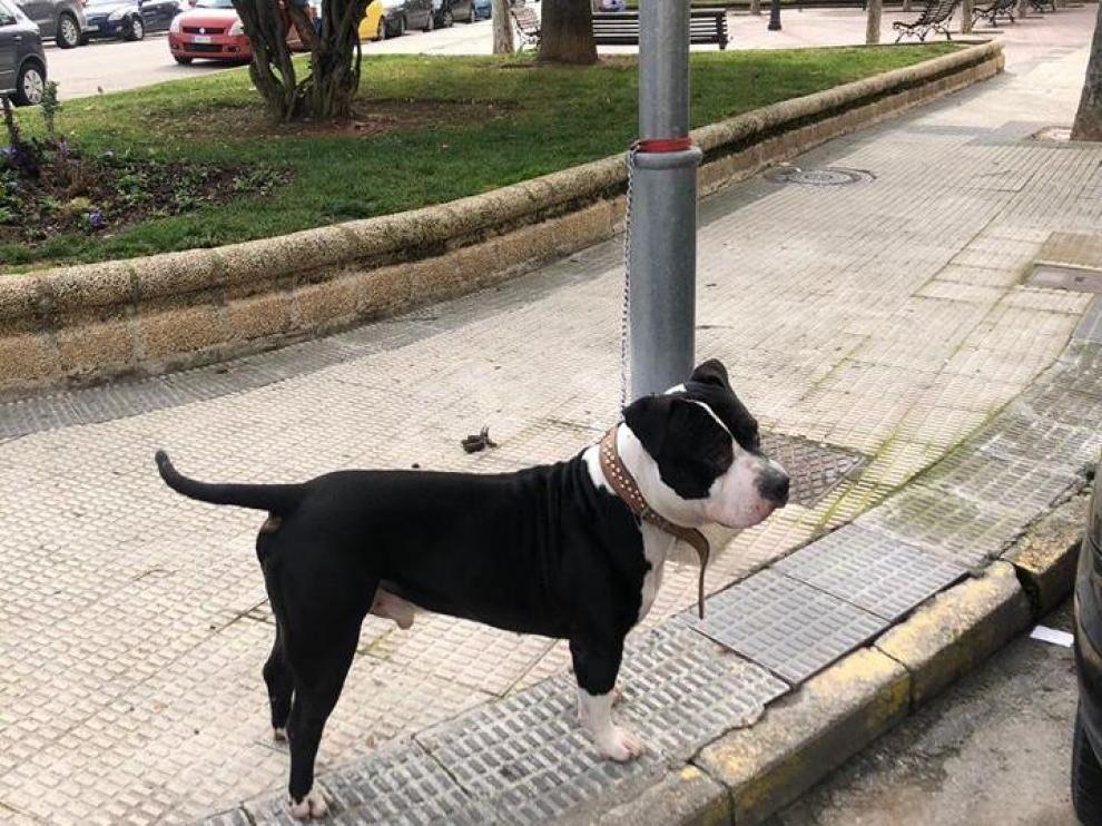 Imagen difundida por la Policía Local del animal atado a la farola.