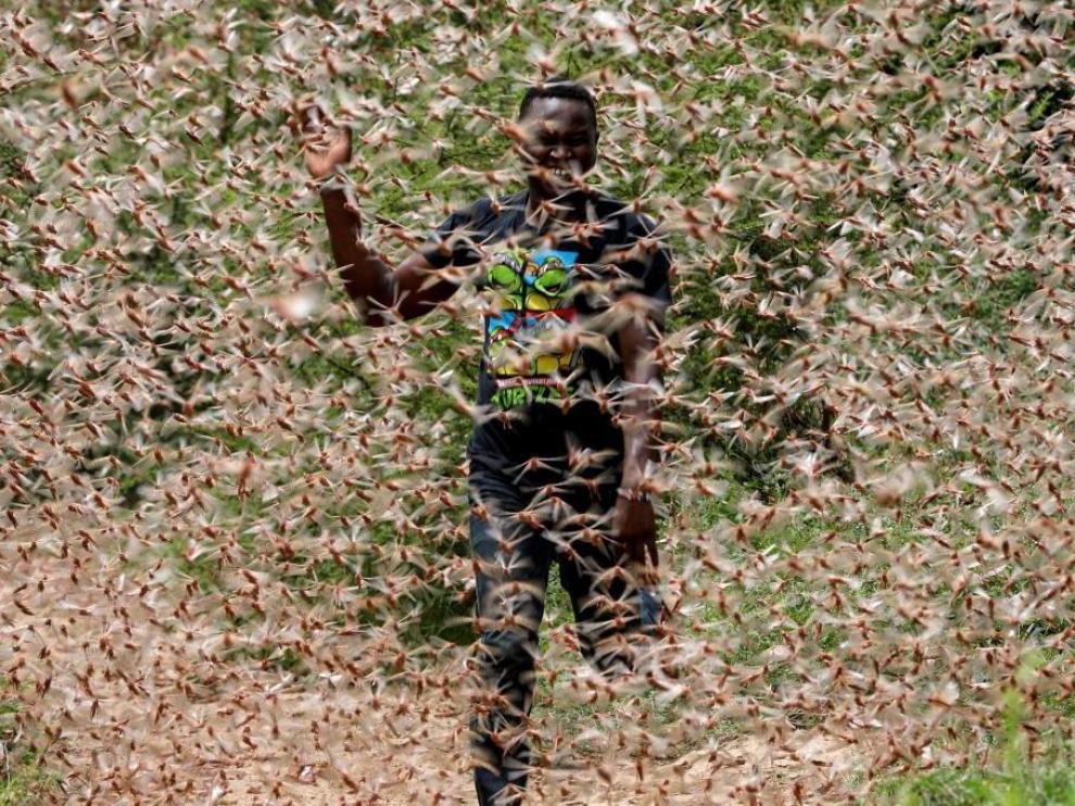 Un hombre, en medio de una nube de langostas en Kenia.