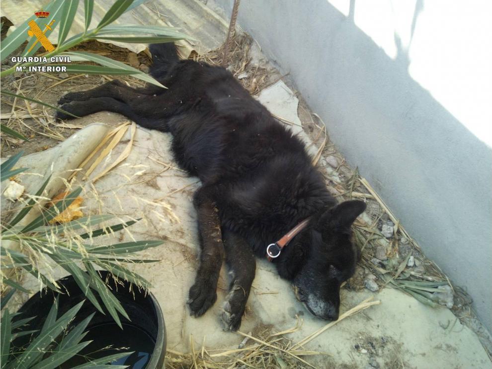 Uno de los animales encontrados en El Burgo de Ebro.