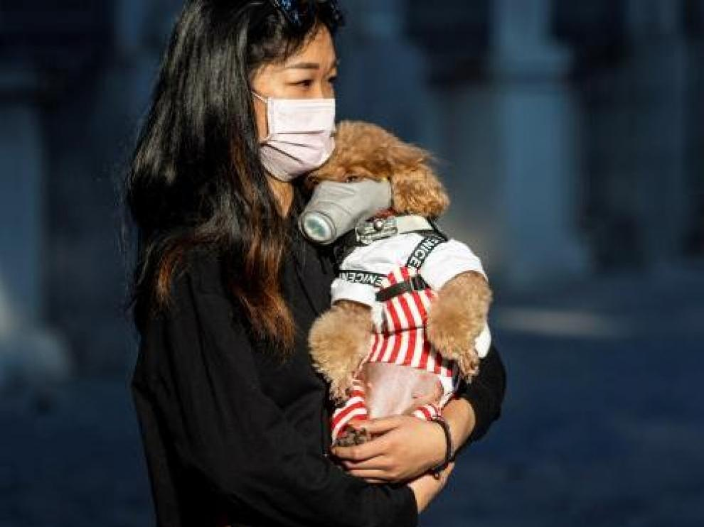 Un perro con mascarilla, en China.