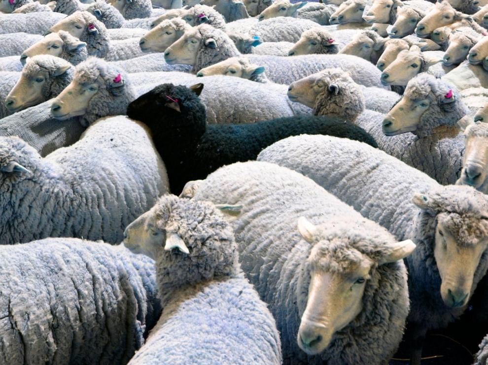SuperMarta no es una oveja negra cualquiera