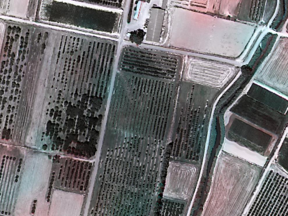 Campos de frutales.