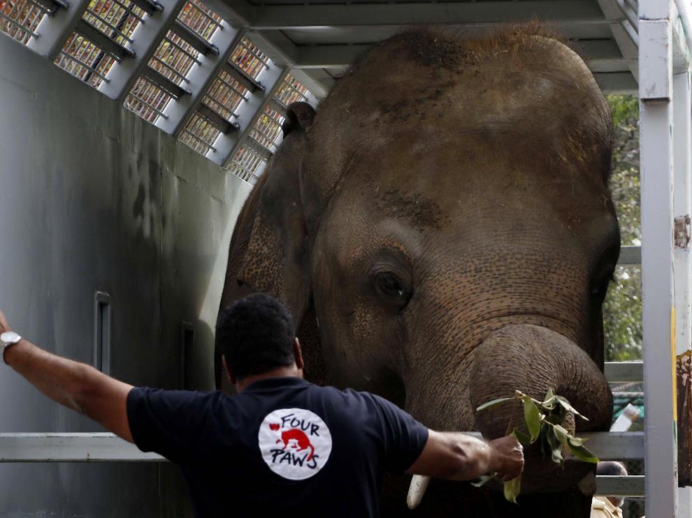 Amir Khalil, veterinario y líder de la misión de Four Paws International, junto a Kavaan, el único elefante asiático de Pakistán, mientras es transportado a Camboya.