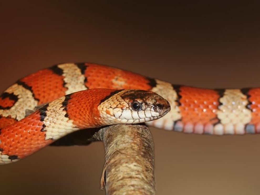 Foto de archivo de una serpiente