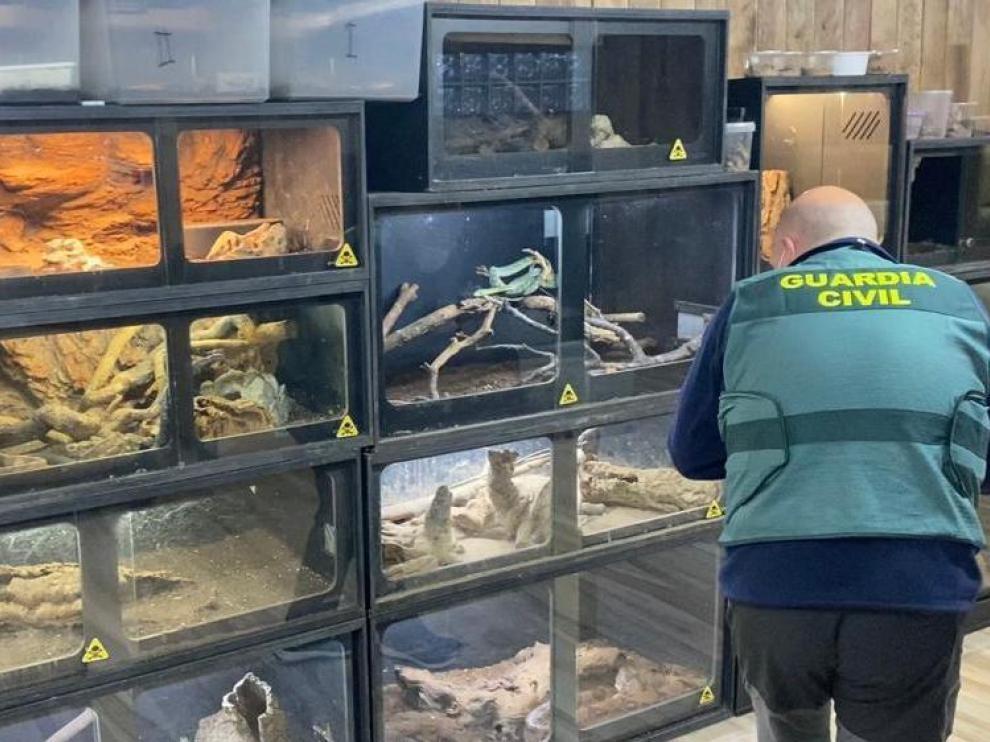 Terrarios donde están los reptiles peligrosos, en su mayoría serpientes y escorpiones