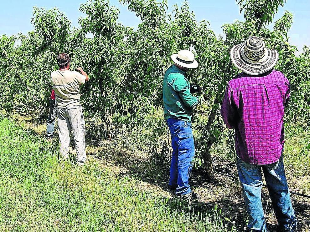 Trabajadores temporeros en una explotación frutícola de la provincia de Huesca.