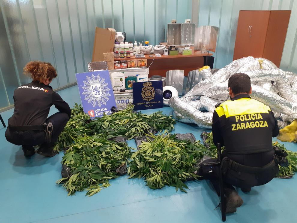 La Policía encontró las plantas de marihuana en el interior del piso incendiado.