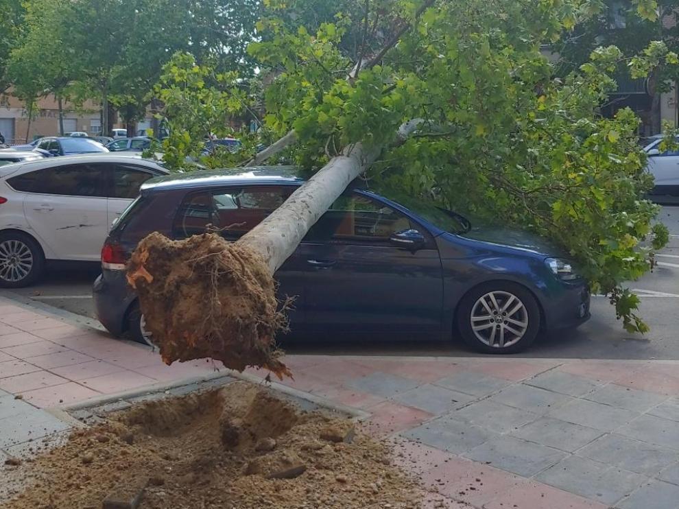 Árbol que ha caído este sábado sobre un coche estacionado en Utebo.