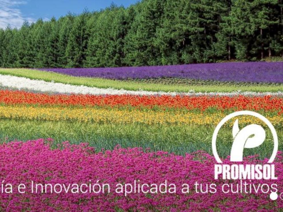Página web de la empresa Promisol