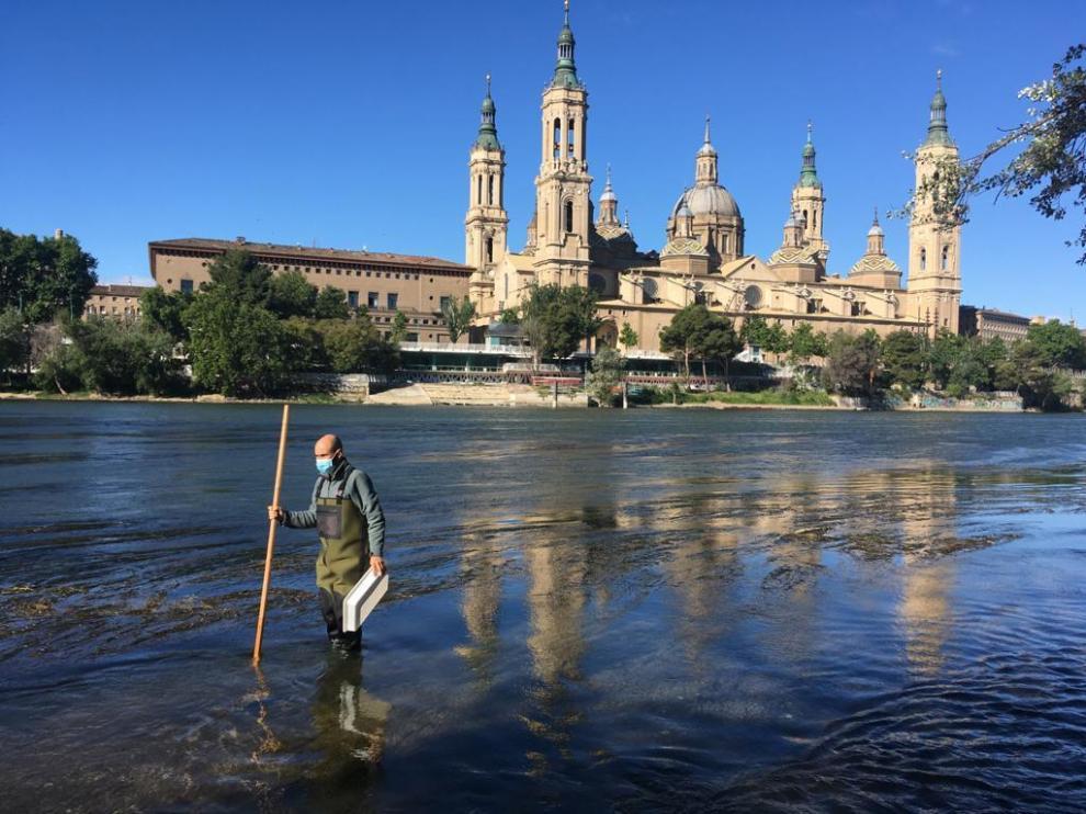 Este martes se han realizado un muestreo sobre la presencia de mosca negra en Zaragoza.