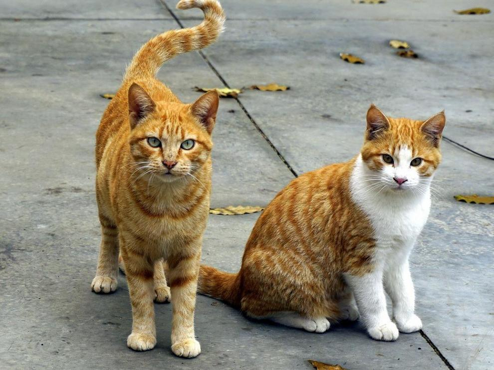 Foto de archivo de dos gatos