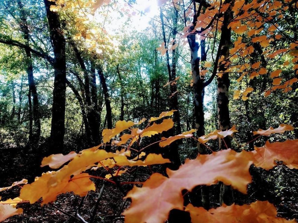 El bosque de Banastón es uno de los más valorados por los viajeros.