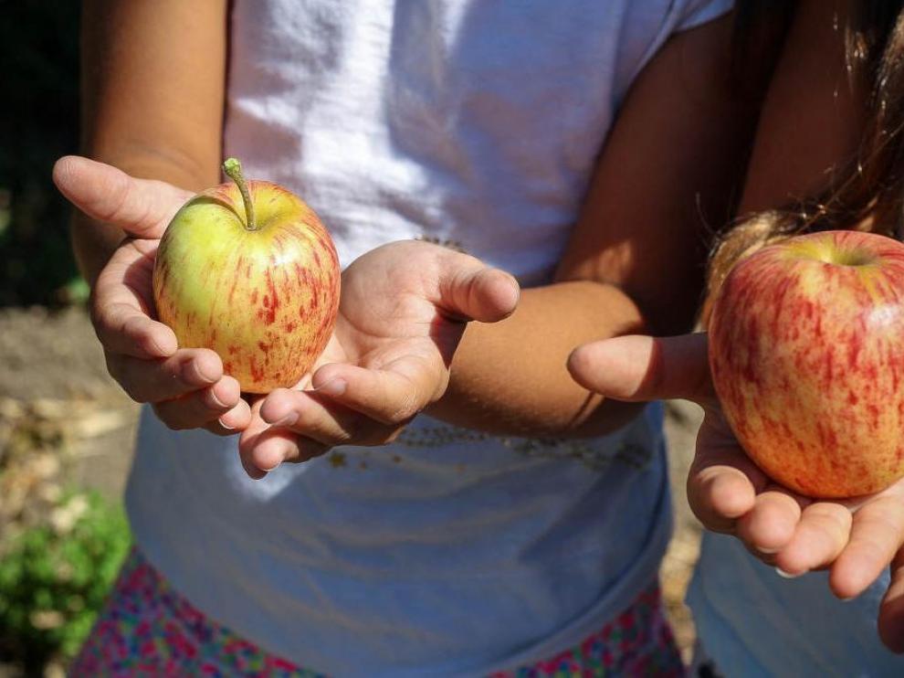 Los huertos urbanos ayudan a que los niños se acerquen a los alimentos de proximidad.