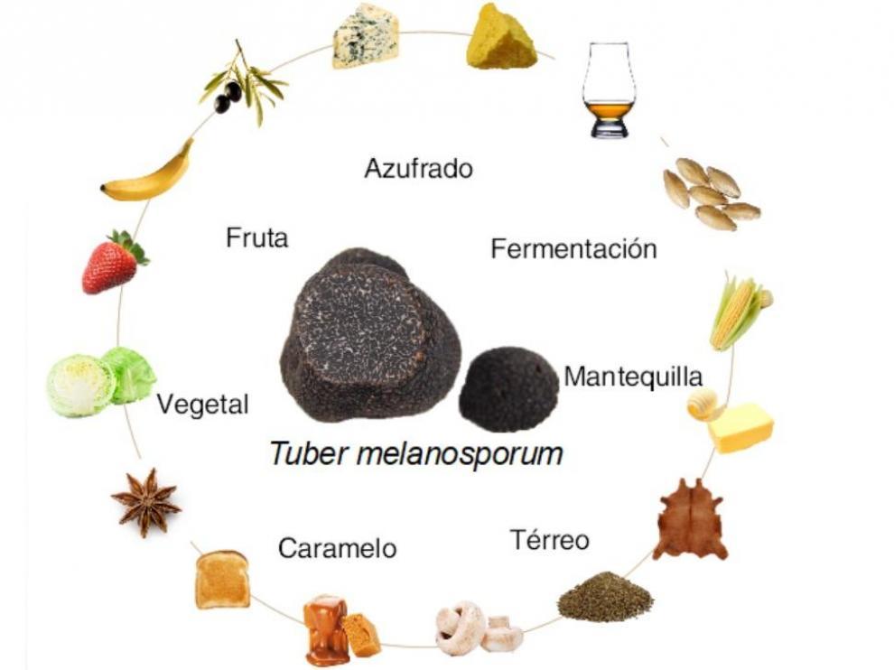 Aromas de Tuber melanosporum