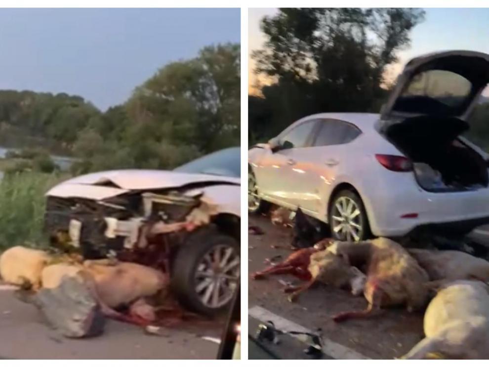 Varias ovejas quedaron debajo del coche accidentado