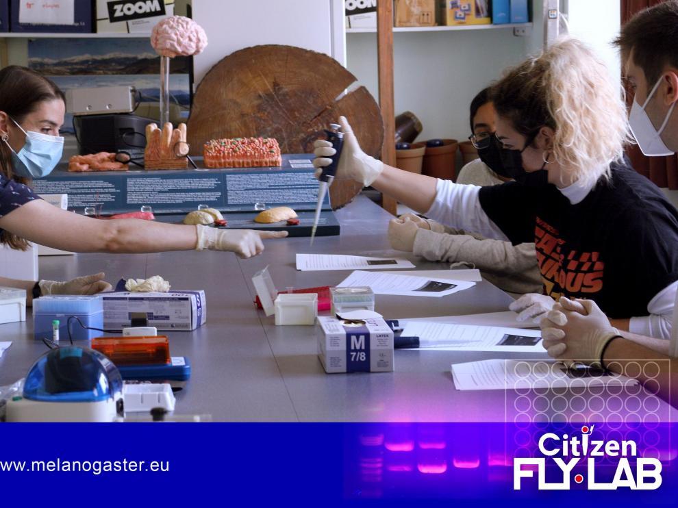Citizen Fly Lab es un laboratorio móvil de biología molecular dirigido a estudiantes de secundaria y bachillerato