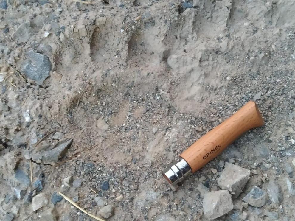 Foto de la posible huella de oso aparecida cerca de Plan.