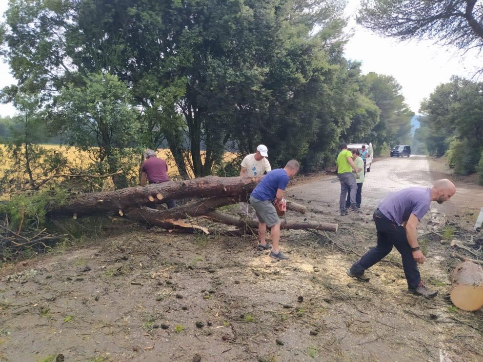 Varios vecinos de Riglos han acudido con motosierras para cortar el pino que había cortado la carretera de acceso al pueblo.