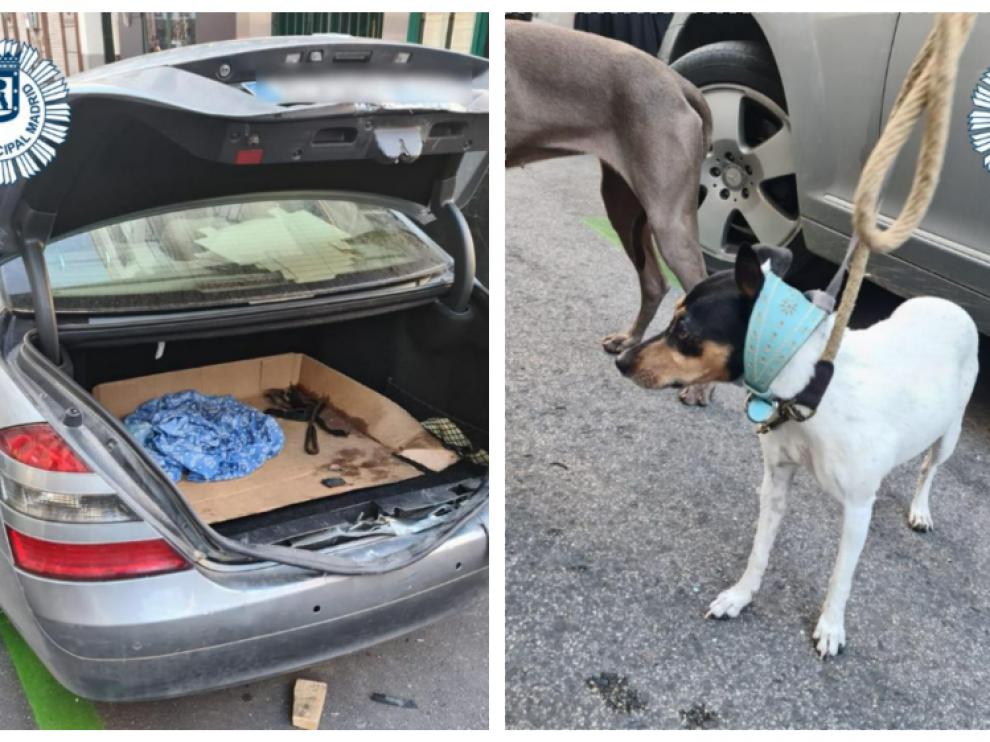 Rescate de tres canes que estuvieron durante tres horas encerrados en el maletero de un turismo.