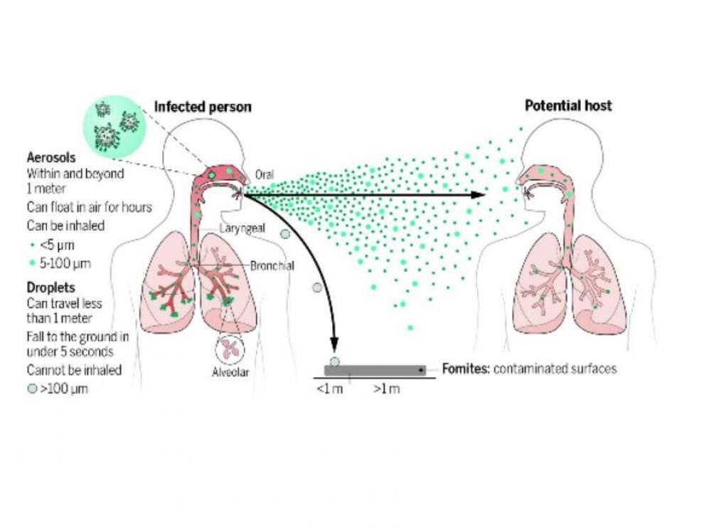 Transmisión de virus respiratorios. Los aerosoles respiratorios se emiten al respirar, hablar, cantar, gritar, toser y estornudar. Pueden permanecer suspendido en el aire, viajar más allá de un metro de la persona infectada y ser inhaladas.