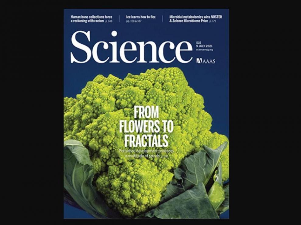 Una investigación sobre el diseño fractal en las coliflores, portada de 'Science'