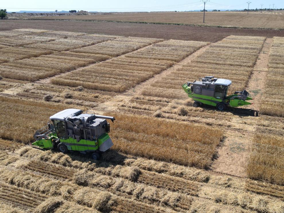 La ausencia de precipitaciones durante la recolección ha facilitado el trabajo de las cosechadoras en los campos aragoneses.