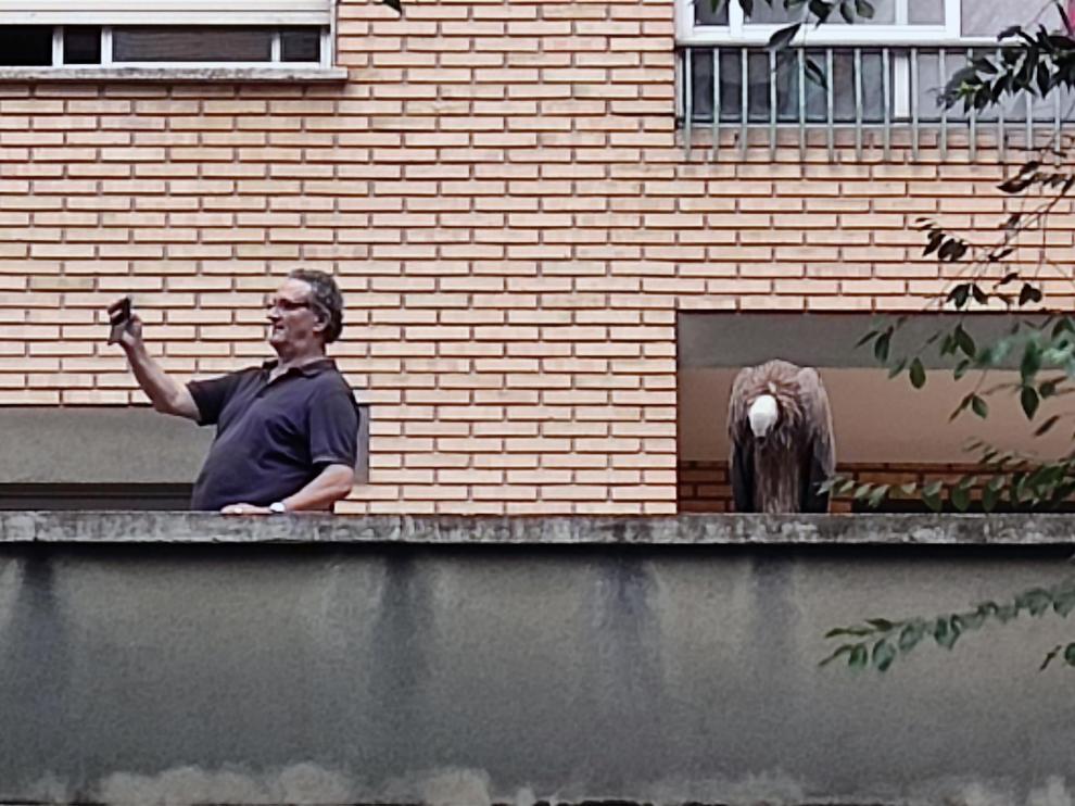 El 'selfie' del vecino con el buitre posado en el balcón.