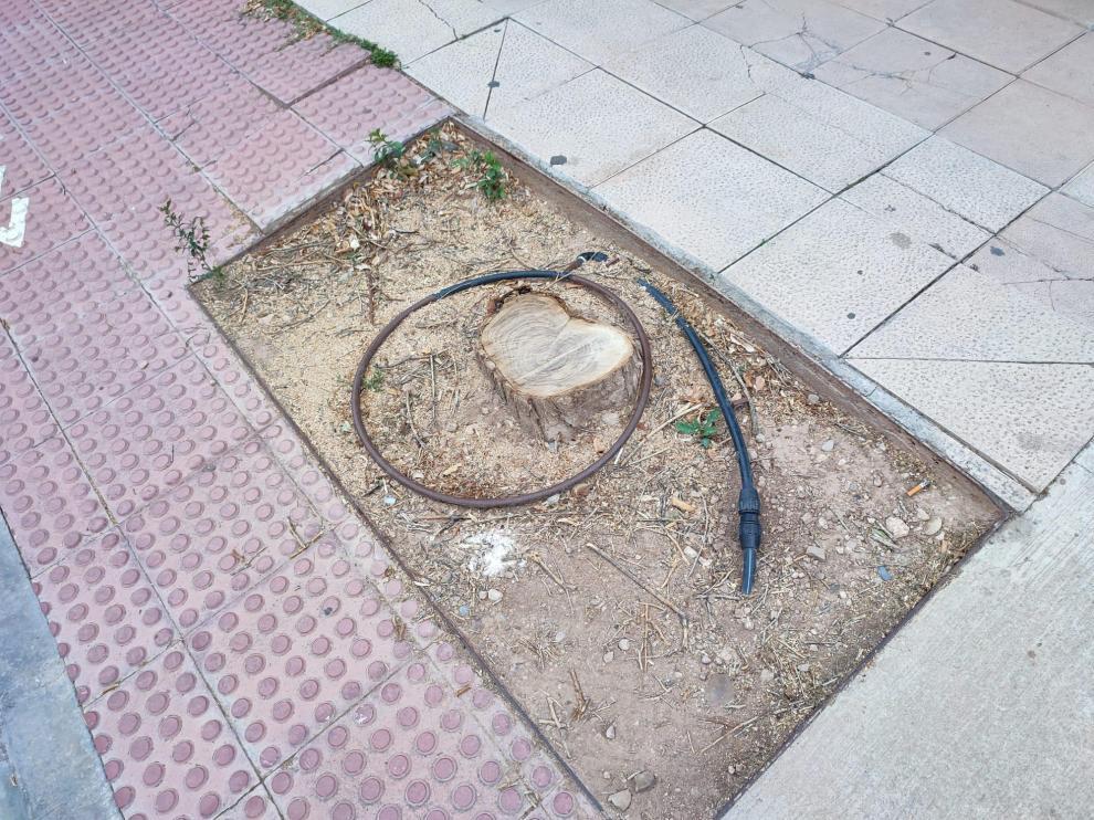 Alcorque vacío en el Distrito Sur de Zaragoza.