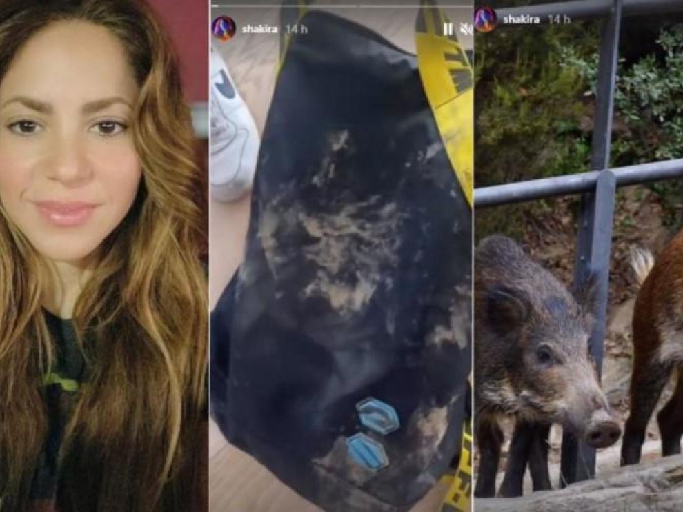 De izquierda a derecha, Shakira, su bolso destrozado, y los dos jabalíes autores del ataque.