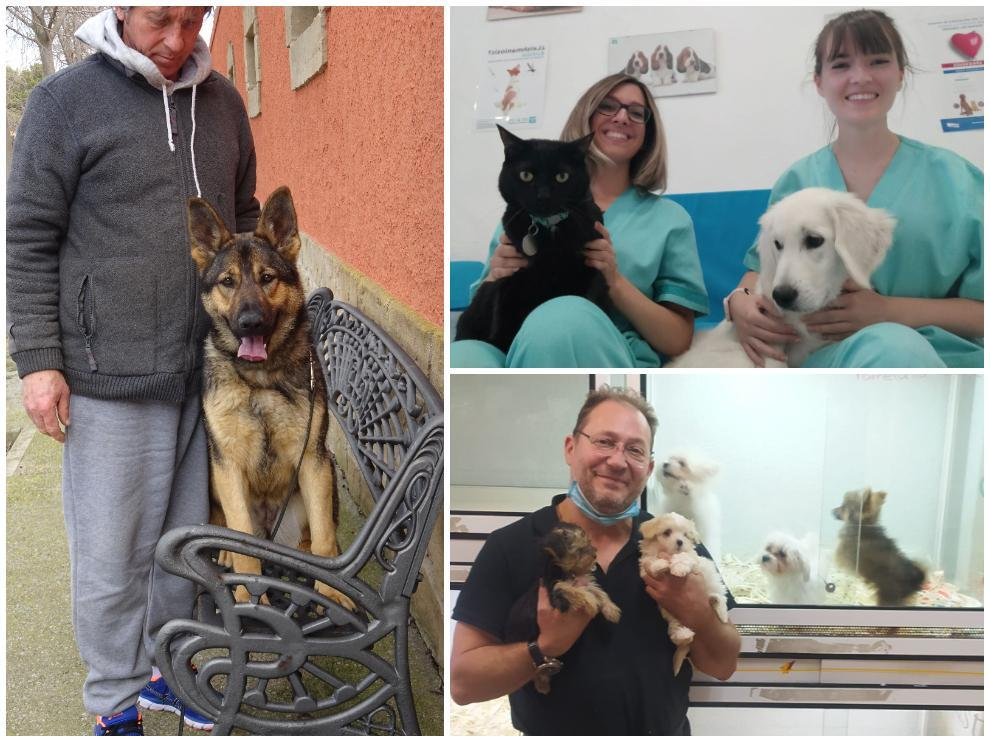Clínicas veterinarias, tiendas y entrenadores de mascotas, ante la futura ley de protección animal.