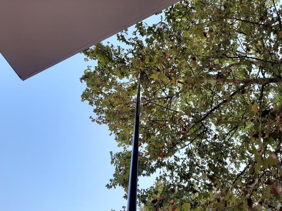 Las ramas de los árboles tapan las farolas por varias zonas de Avenida Cataluña, Paseo Longares y alrededores
