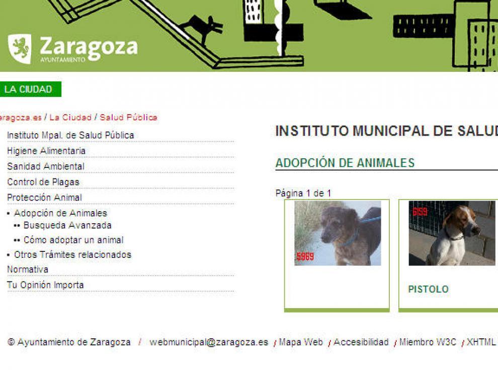 El Ayuntamiento permite la adopción deanimales a través de su web