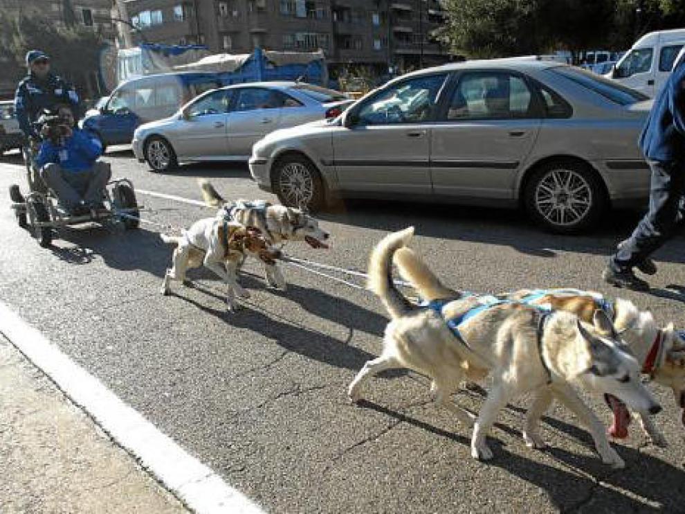 Trineo tirado por perros en Cesáreo Alierta, el año pasado.