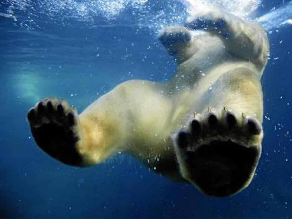 Una cámara acuática capta el momento en el que un oso se zambulle en un lago de agua helada