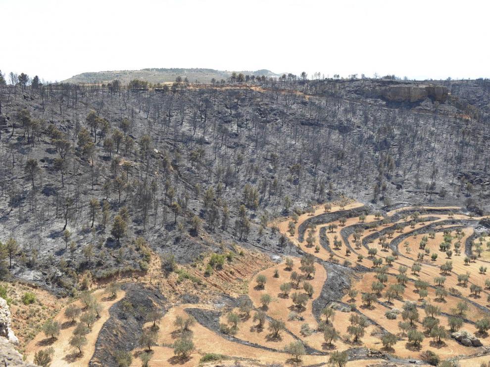 Parte del terreno arrasado por las llamas en Alloza