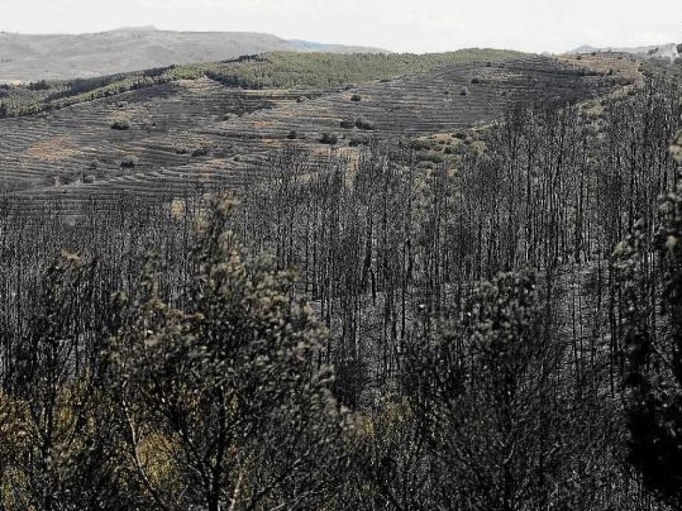 Bosques carbonizados por el incendio Valmadrid.