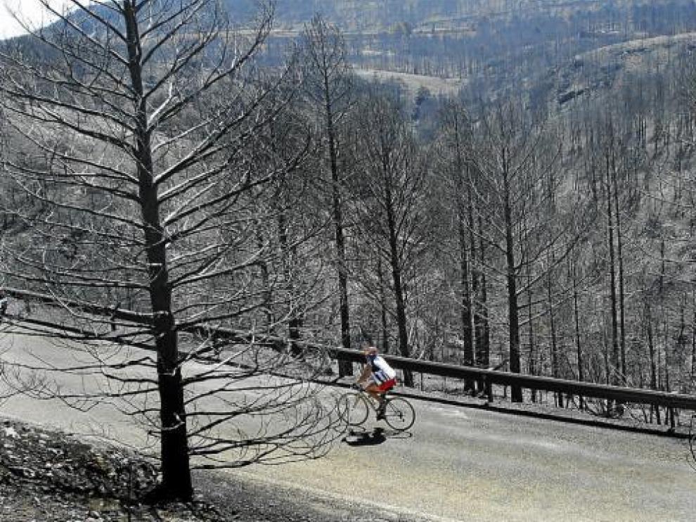 Bosques arrasados por el gran incendio de Aliaga, que en julio quemó 7.353 hectáreas.