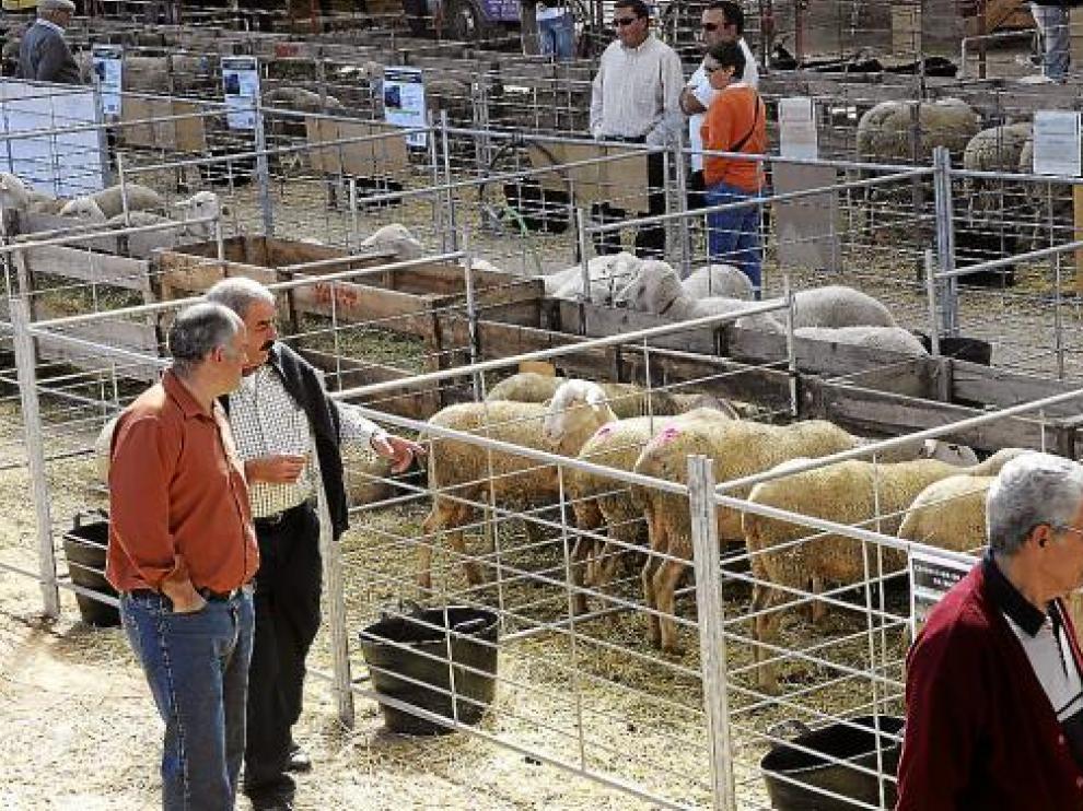 La Feria de Cedrillas resiste ante la crisis y atrae a un millar de ganaderos de medio país