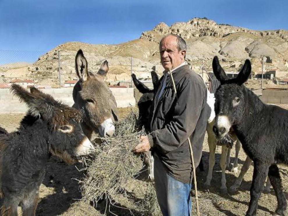 Joaquín Nuño, ayer en Maluenda, con sus burros